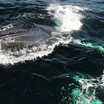 The face of a humpback...