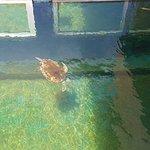Foto de Rayong Aquarium