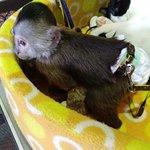 Foto de Nasu World Monkey Park