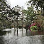 Pond at the plantation