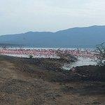 Flamingo at lake nakuru