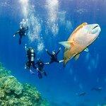 Whitsunday Fishing Charters: Help to fulfil your fishing destination advanture trip.