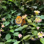 Don't miss the butterfly exhibit