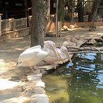 Photo of Limassol Zoo