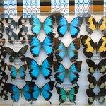 Museo di Storia Naturale - Butterflies