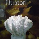 Museo di Storia Naturale - Seashell