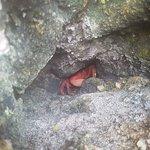 Billede af Marietas Islands