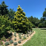 Foto van U.S. National Arboretum