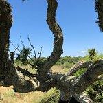 Parco della Giara Tuili照片