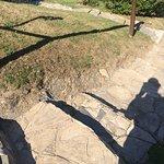 Grattons Cedar Lodges Picture