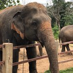 Foto de Maerim Elephant Sanctuary