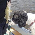 Walleye / Pickerel fishing. Pet friendly facility @ Deluxe Camp.