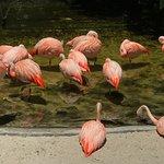 Flamingo pond at Sunken Gardens