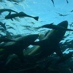 Shark Cage Divingの写真