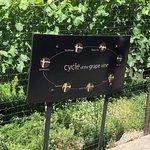 Cycle of the grape at Chandon