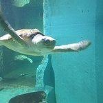 tortue aquarium