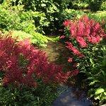 Zdjęcie Longstock Water Gardens