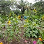 Harry P. Leu Gardens의 사진