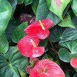 Foto Foster Botanical Gardens