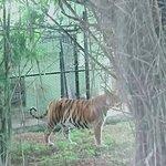 Photo de Bannerghatta National Park