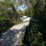 Walk thru the Mangroves