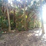 Wild Gulf Coast Florida
