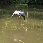 Griggstown Canoe and Kayak Rental照片