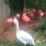 Bild från Birmingham Zoo