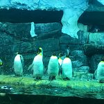 Penguin exhibit with seating so you can relax and watch the cute little guys swim around