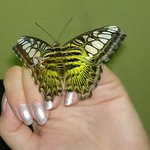 Photo of Butterfly House Varna