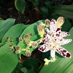 Фотография Kanapaha Botanical Gardens