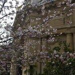 arbres en fleur au jardin