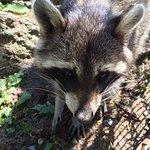 Zoo Et Piscine des Marecottes Foto