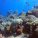 Photo of GoDeep Philippines - Diving Center