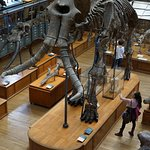 Look this wonderful fossil mammoth!