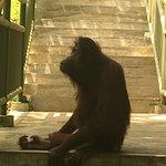 西必洛猿人保护区照片