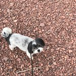 Fritz explores pink beach, Two Harbors.