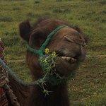 Bilde fra Sahara Revelation