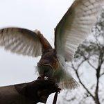 Foto de Parque da Ovelha