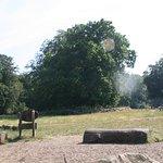Ashridge park