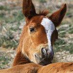 Foto de Pilot Butte Wild Horse Scenic Loop
