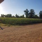 Sahuaro Ranch Park照片