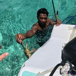 One of our guides catching lobster