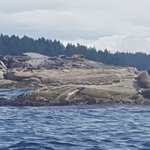 A great spot for seal watching