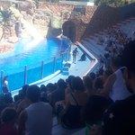 Zoomarine Algarve - Theme Park Photo