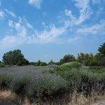 Foto Parco San Giuliano