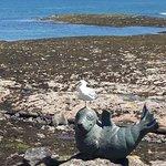 Scottish Seabird Centre照片