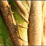 Two lizards at the entrance of Green Cay