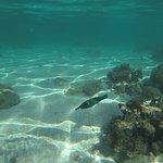 希尔顿莫雷阿岛潟湖度假村照片