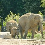 Elephant and two youngsters of different ages
